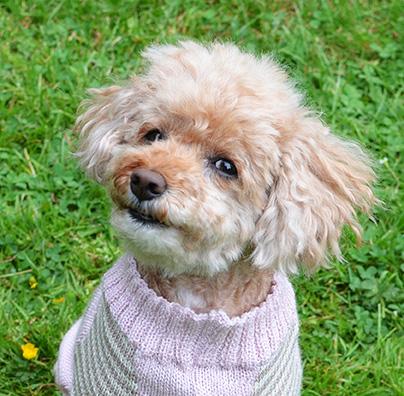 otello-hunde-pullover-bijou_model
