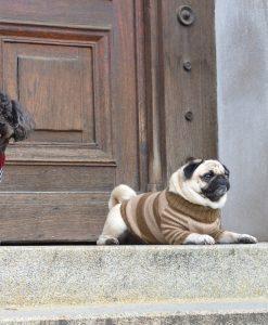 Otello-Hundepullover-Mops