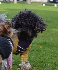 Hunde-Pullover Otello