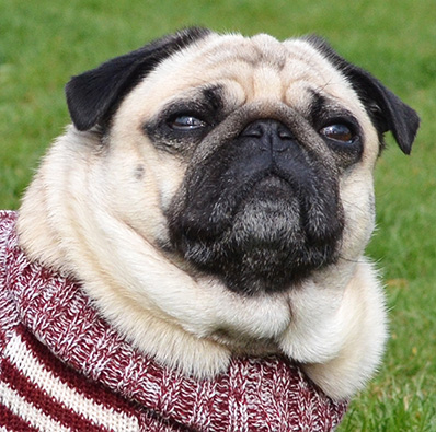 otello-hunde-pullover-paul-model