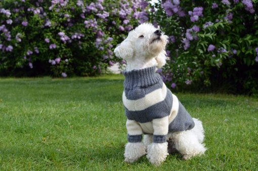 hunde-pullover-otello-pudel