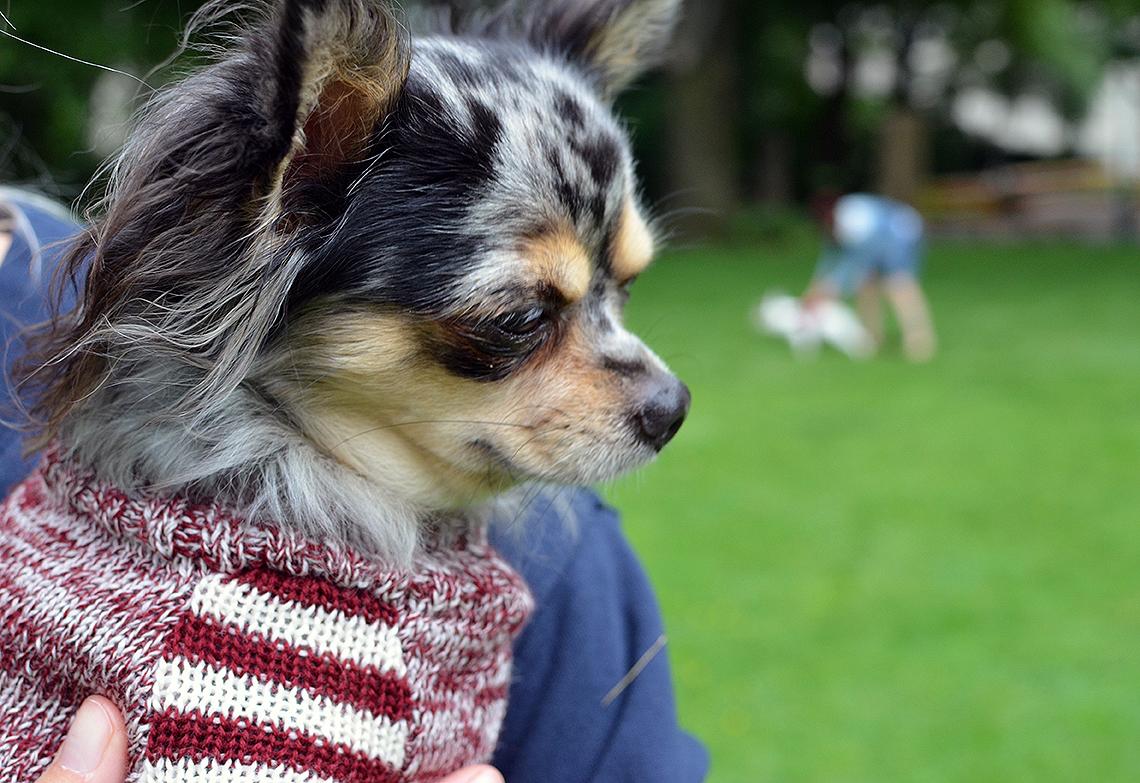 Otello Hunde-Pullover bodennah
