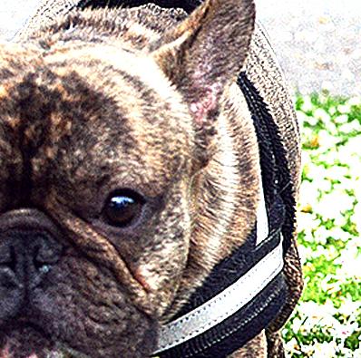 Otello. The Dog Pullover Charlie