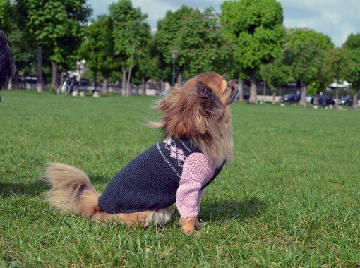 dog-pullover-otello