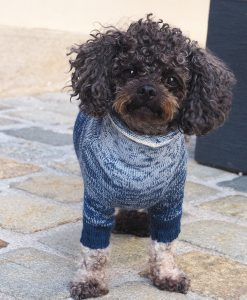 otello-dogpullover